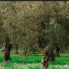 Metanodotto a  Lecce, troppe controindicazioni per il paesaggio e il territorio