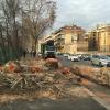 Abbattimenti alberi:  serve più informazione e più trasparenza (e ripiantumazioni certe)