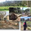 Dossier Verde Capitale: quello che i cittadini dovrebbero  sapere