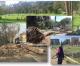 Nuova assessora all'ambiente, una lettera della Comunità territoriale del VII Municipio alla Sindaca