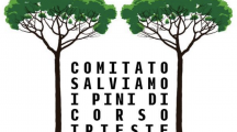 Pini di corso Trieste: chiediamo trasparenza e condivisione con i cittadini