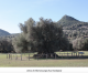 Elenco degli alberi monumentali d'Italia e del Lazio