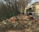 9. Più regole e trasparenza sugli abbattimenti degli alberi?