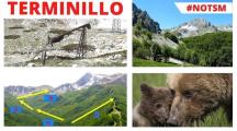 Regione Lazio, nuove piste da sci sul Terminillo valgono il sacrificio dei boschi?