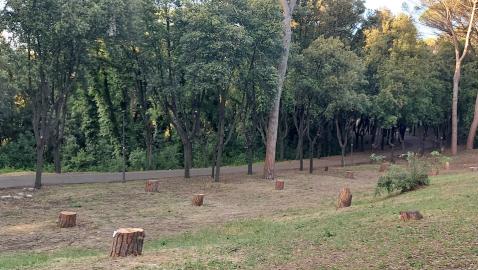 A Villa Glori si continuano ad abbattere i pini senza rispettare le prescrizioni del Regolamento del Verde