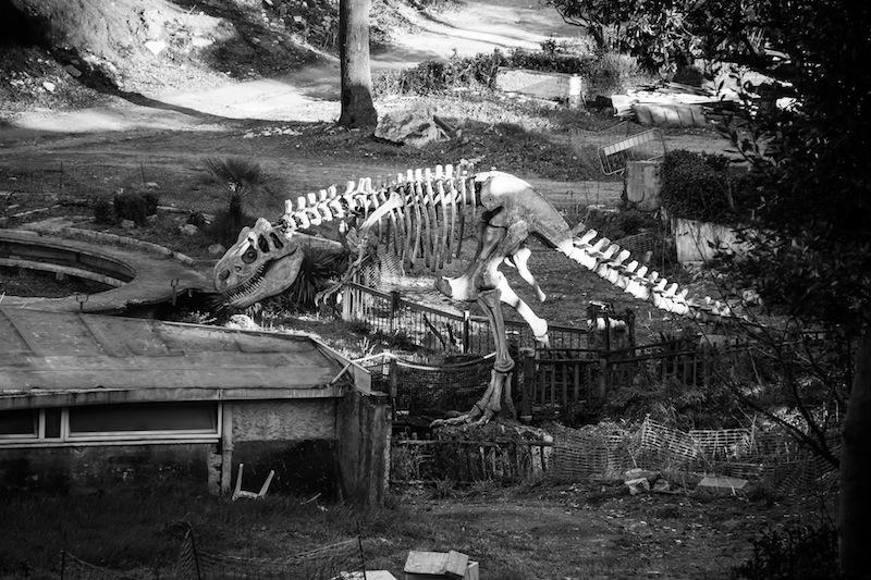 Light elisa_MG_1007 scheletro dinosauro luneur