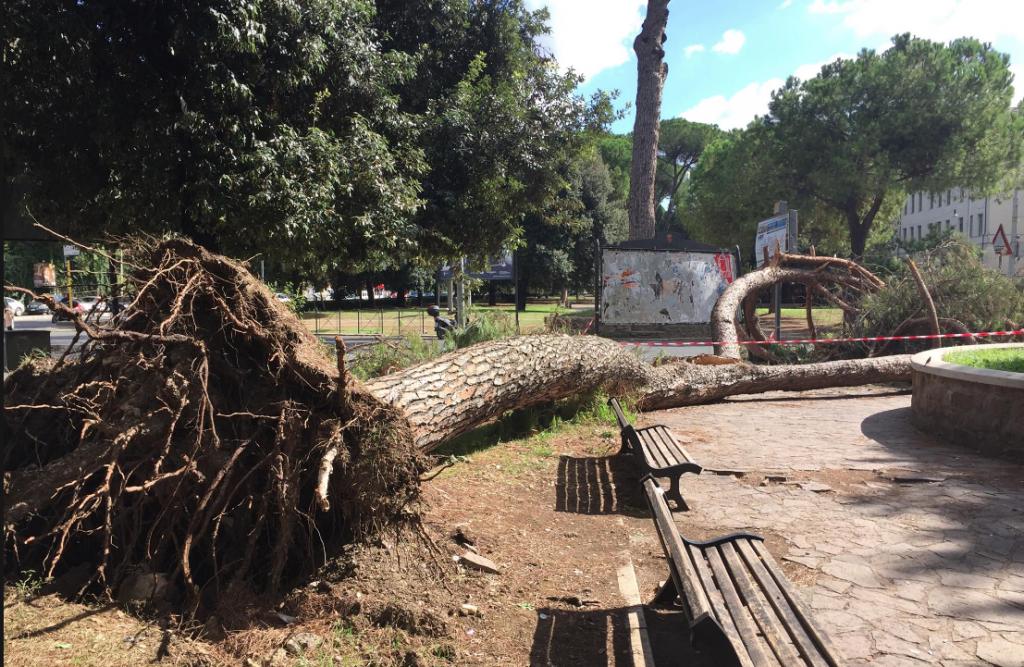 albero caduto piazza Manila settembre 2017 2