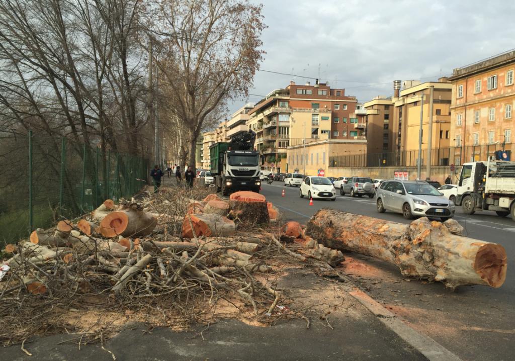 Taglio platani lungo Tevere Flaminio marzo 2018  (foto ambm)