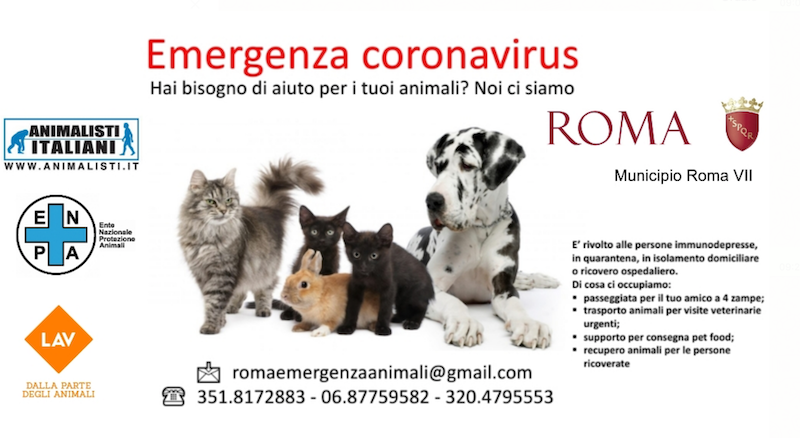 VII municipio assistenza animali