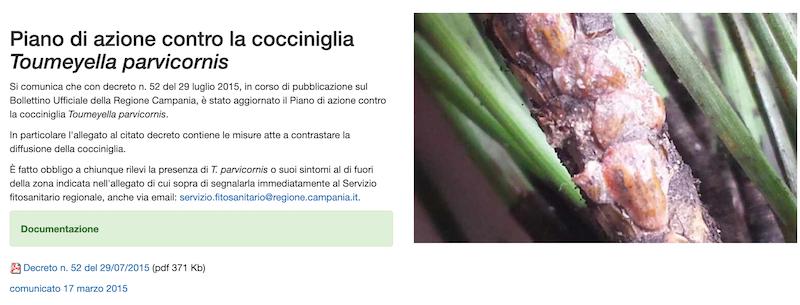 sito regione campania cocciniglia pini Schermata 2020-08-31 alle 16.14.02